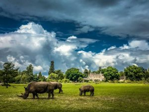 The Cotswolds are more than a day trip from London. This is what you need to know to have an extraordinary time in these gorgeous English villages. Top 10 things to do in Cotswolds England with kids | Family travel | Travel with kids