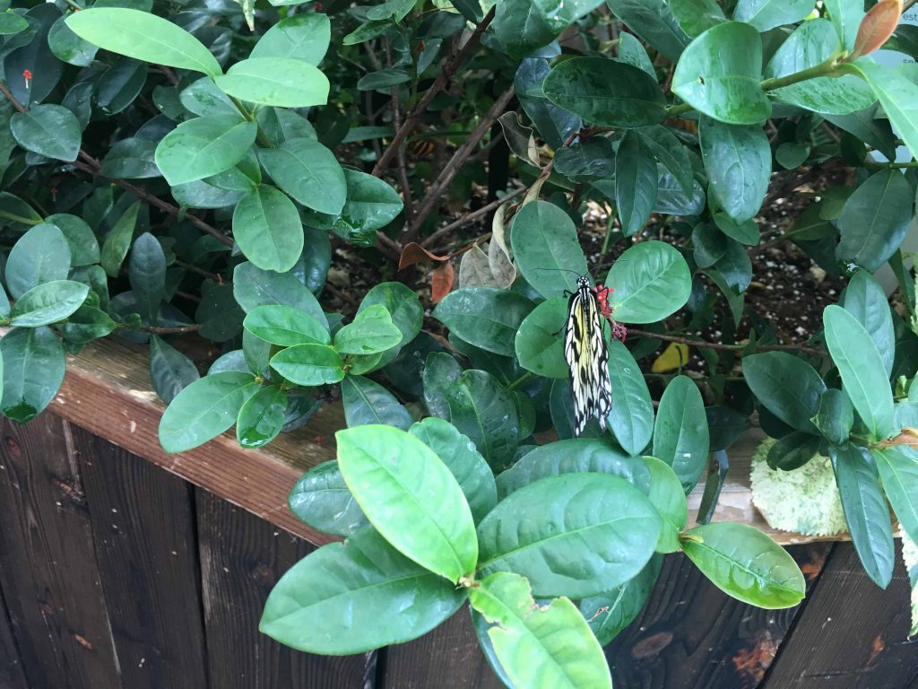 Canadian Museum of Nature. What to Expect from the Butterfly Exhibit at the Canadian Museum of Nature #butterflies #MuseumOfNature