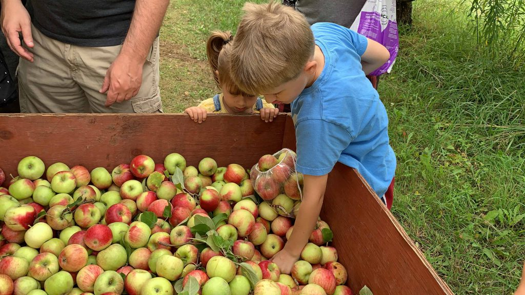 It's almost the season for apple picking in the Ottawa area, here is a list of where to go for this great family outing.