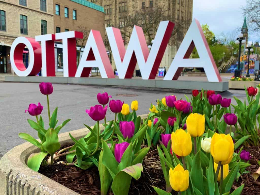 Guide to the Canadian Tulip Festival in Ottawa