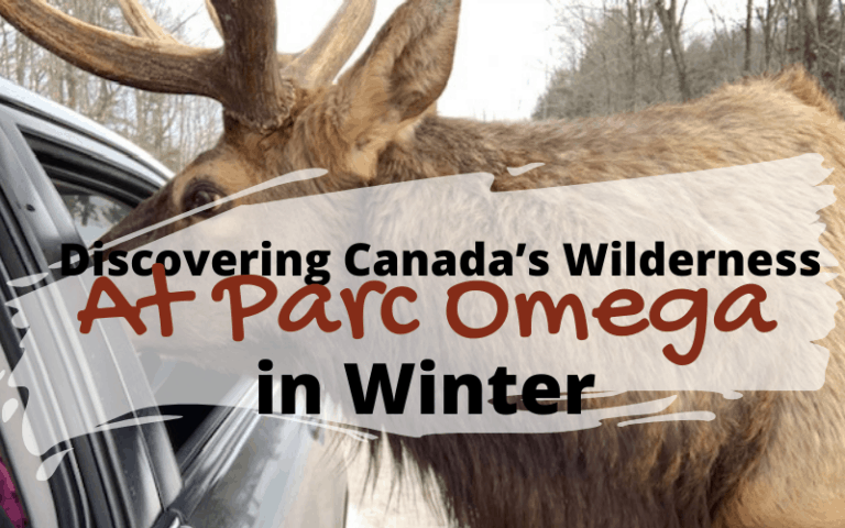 Parc Oméga is an animal park that will allow you to discover animals from Quebec and Canada