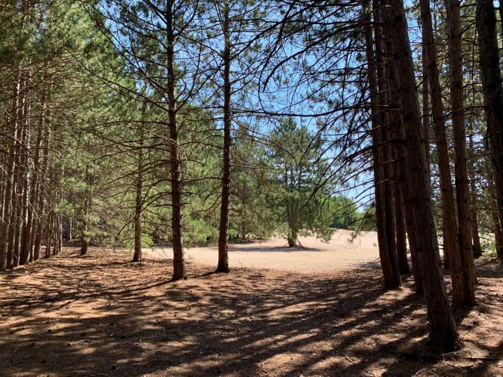 Pinhey Forest Trail Sand Dunes